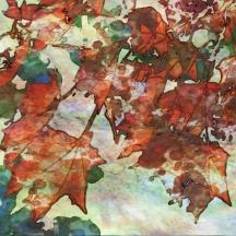 Autumn Colour 1