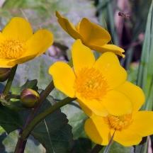 Flowers 5 Star - 10