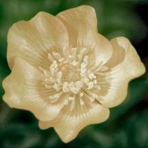 Flowers 5 Star - 20