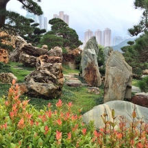 Shrubs, Rocks and Skyscrapers