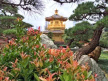 Shrubs and Pagoda