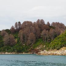 Abel Tasman Park - 10 of 16
