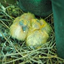 Balcony Pigeons - 2 of 6